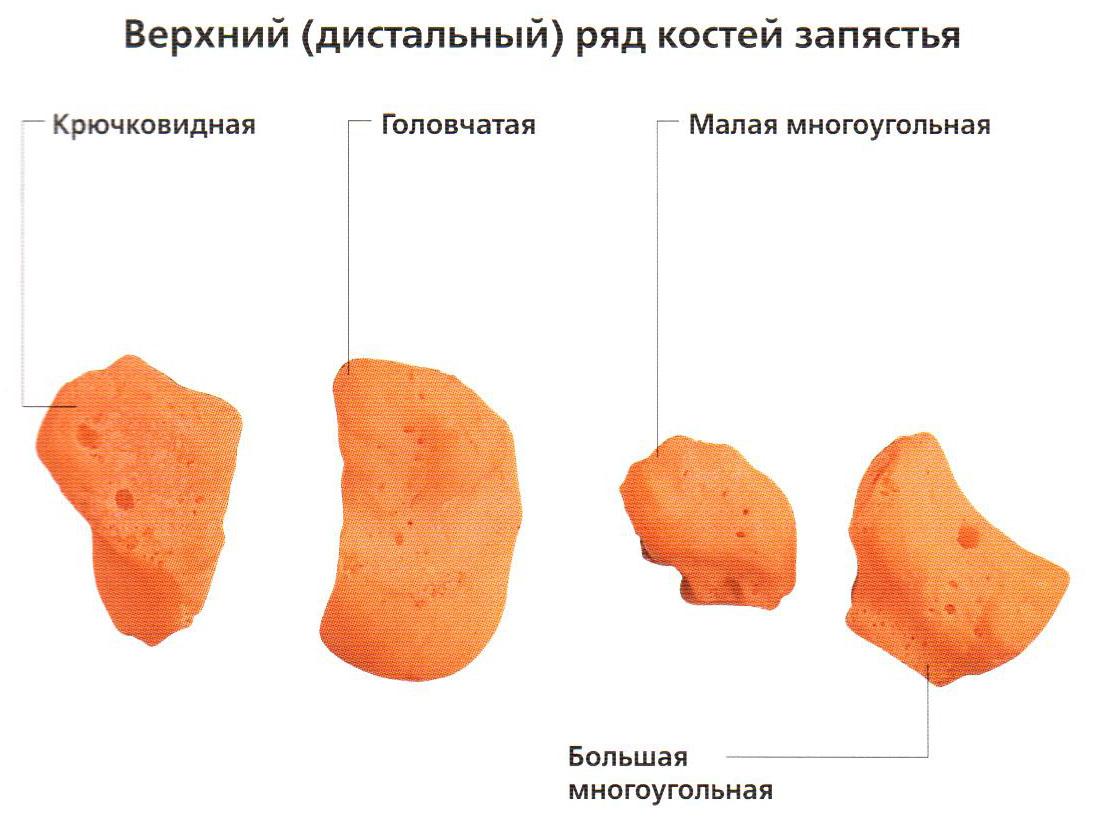 Кость Крючковидная