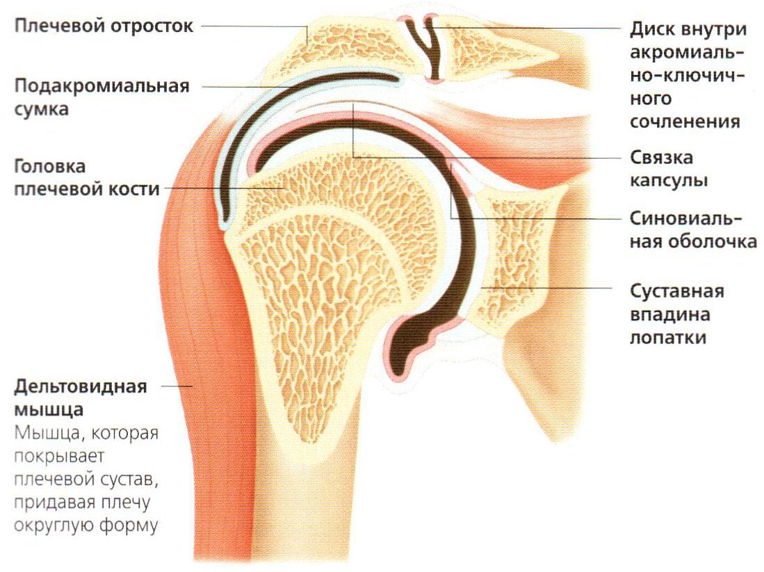 Шейка Плеча Хирургическая