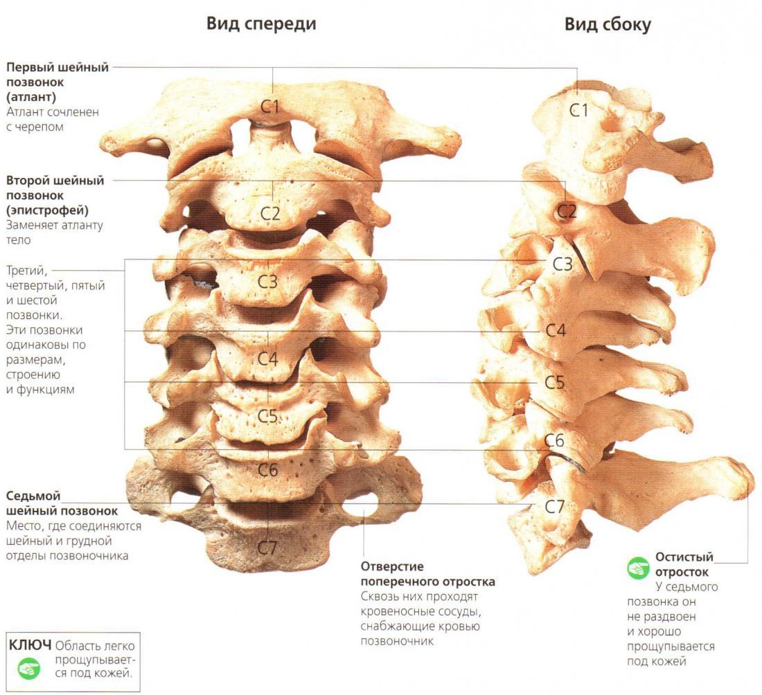Болит шея остеохондроз чем лечить