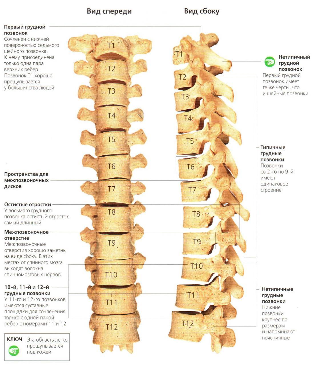 Блокировать боль спина